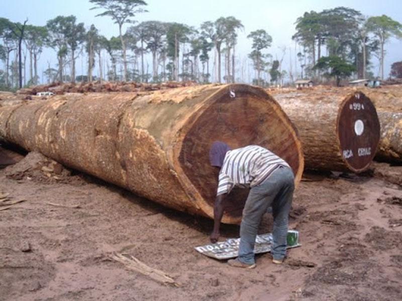ưu điểm của sàn gỗ Lim Nam Phi